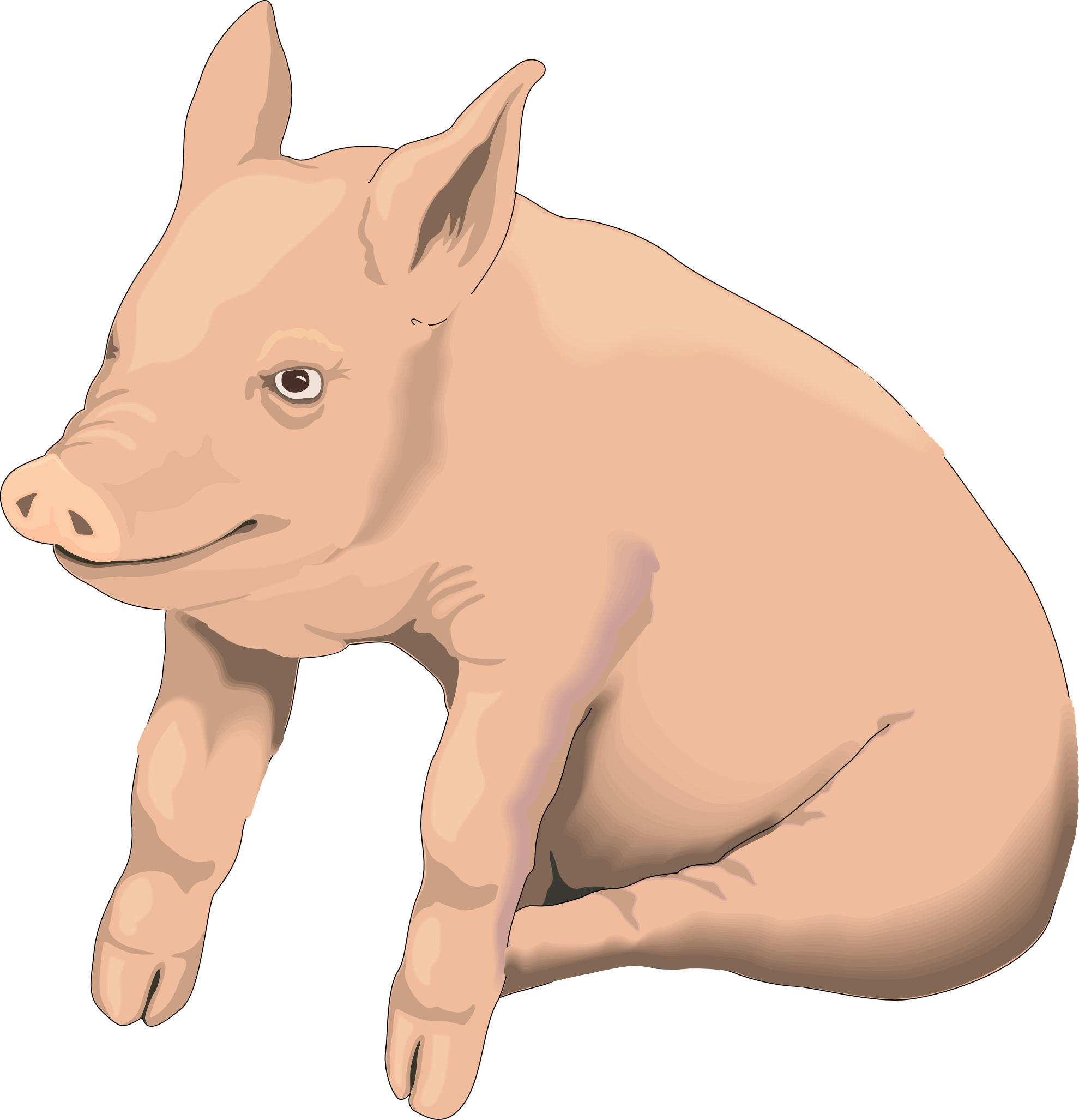 Picture Pig Png Image - Hog Head, Transparent background PNG HD thumbnail