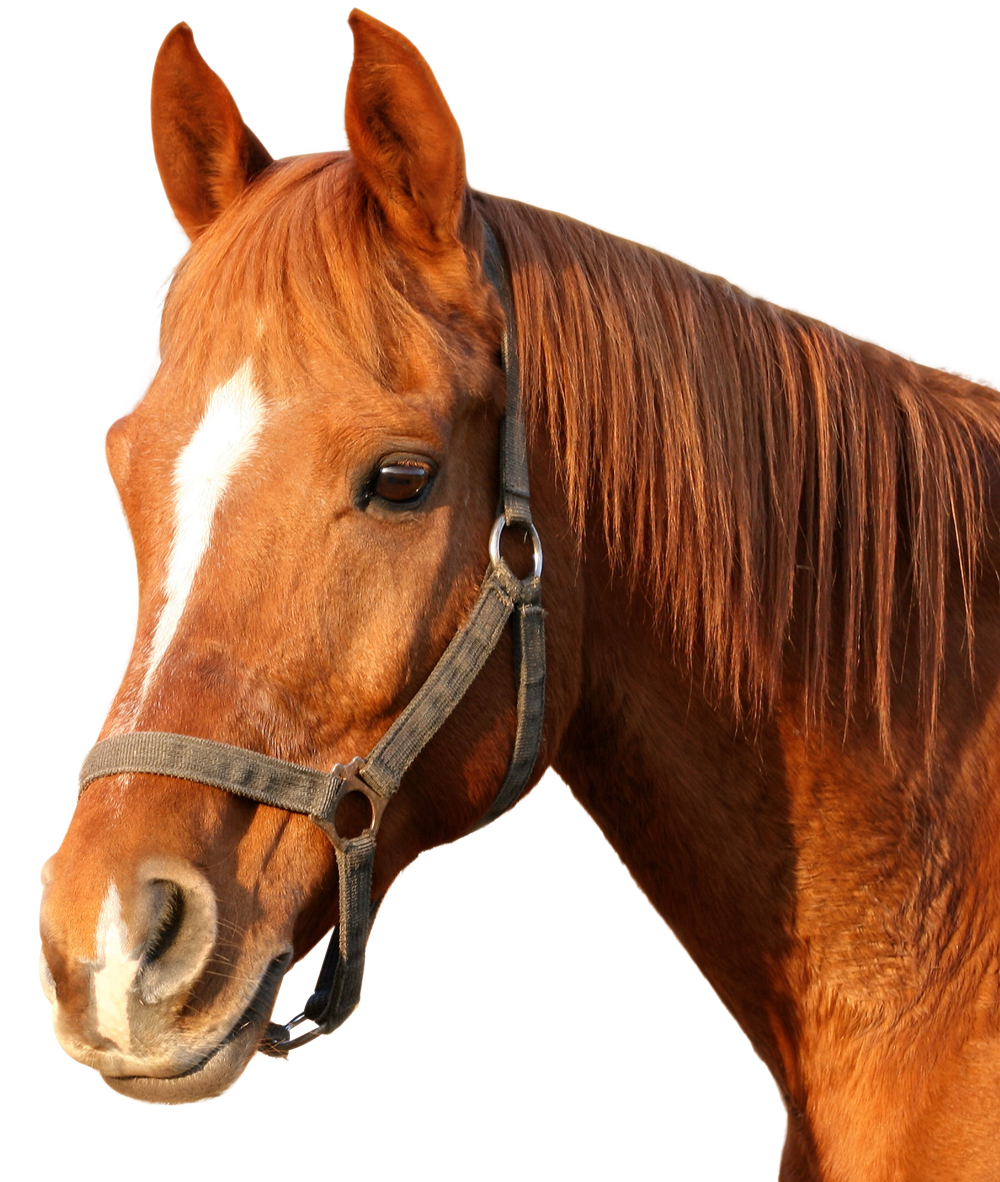 Horse Png Image - Horse, Transparent background PNG HD thumbnail