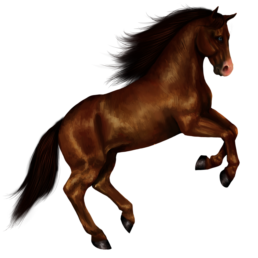 Horse Png Image #22540 - Horse, Transparent background PNG HD thumbnail