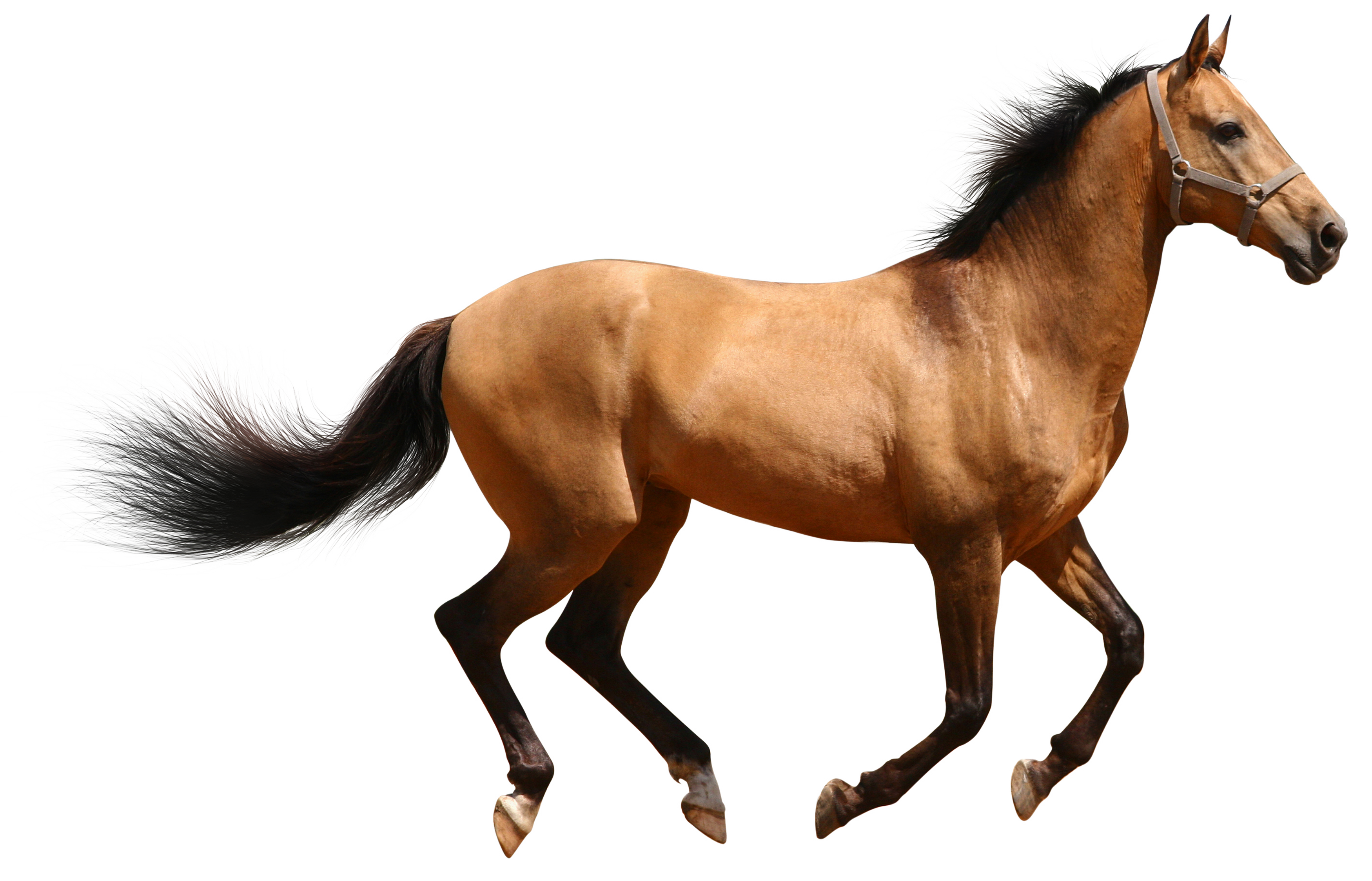 Horse Png Image #22544 - Horse, Transparent background PNG HD thumbnail