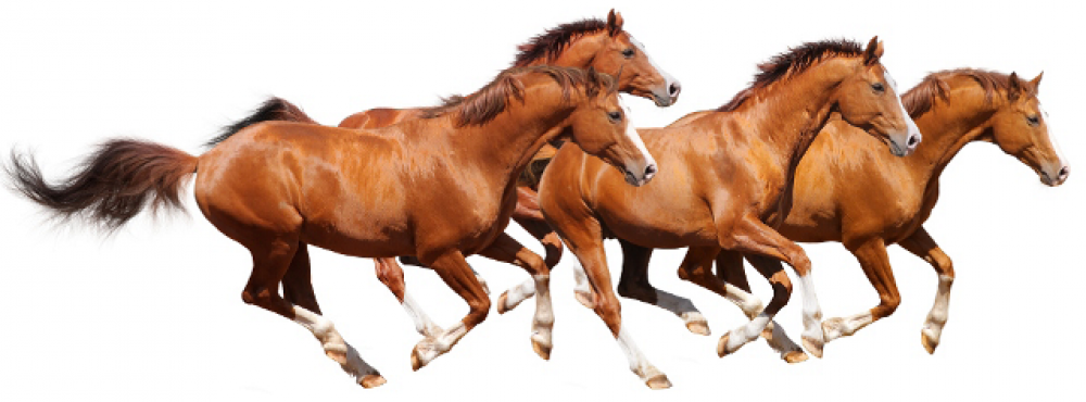 Horse Png Image #22550 - Horse, Transparent background PNG HD thumbnail