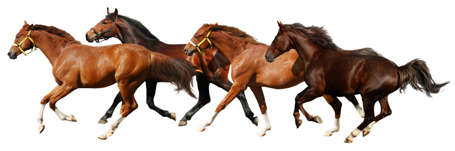 Horse Png Image #22562 - Horse, Transparent background PNG HD thumbnail