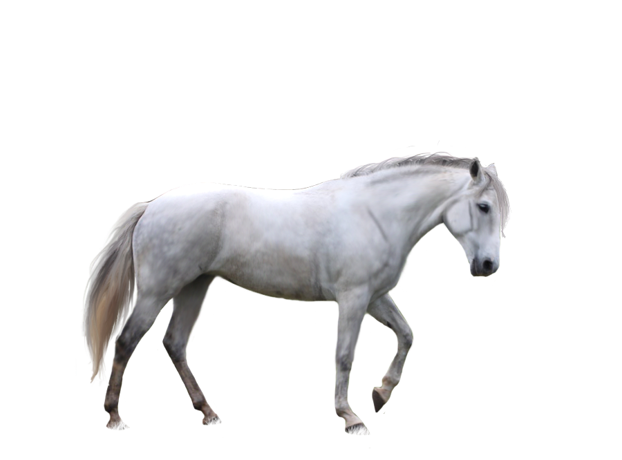 Horse Png Image, Free Download Picture, Transparent Background - Horse, Transparent background PNG HD thumbnail