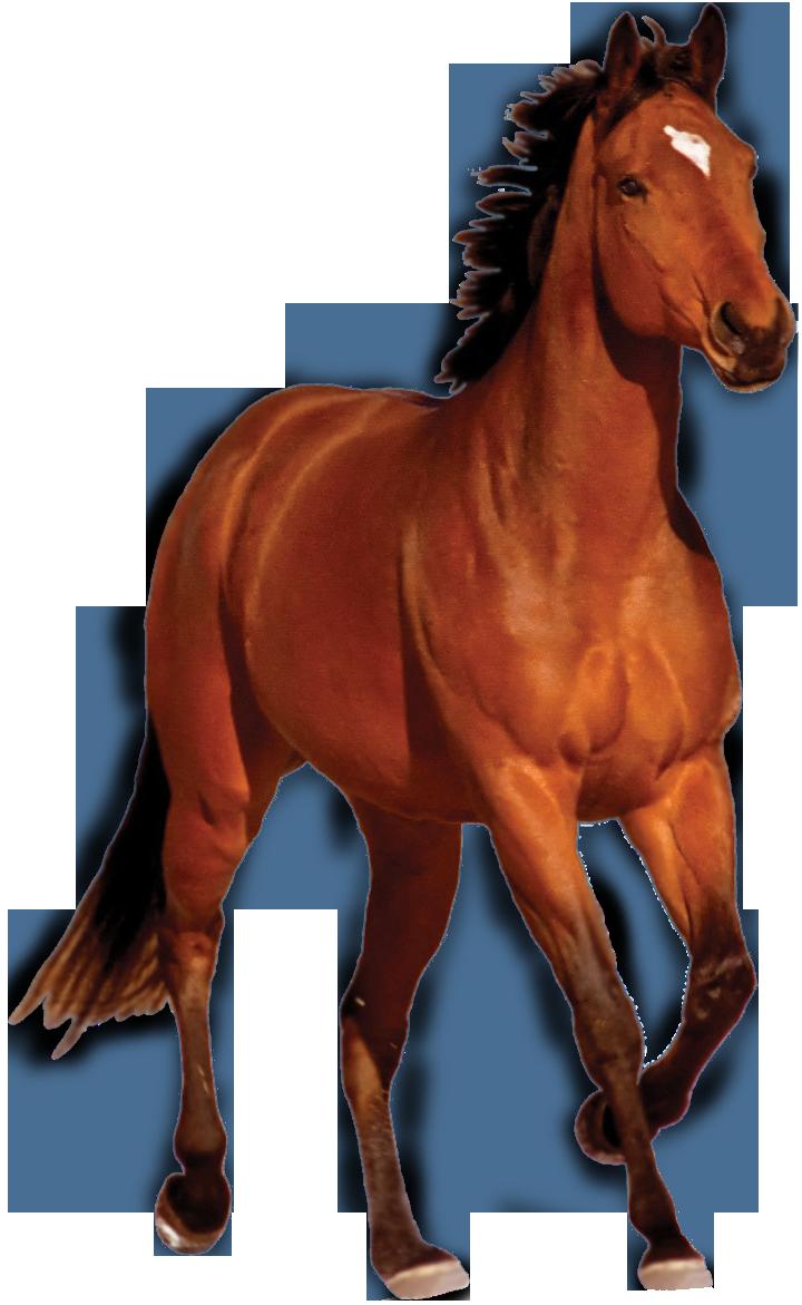 Horse Png Transparent Image - Horse, Transparent background PNG HD thumbnail