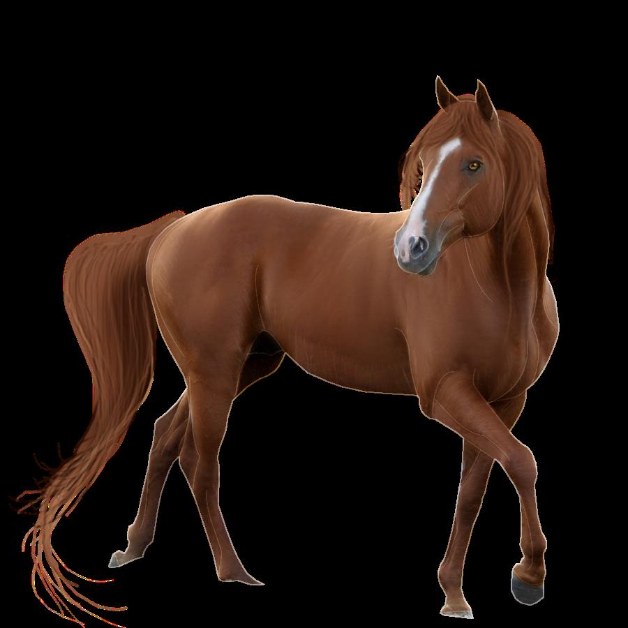 Horse Transparent Background - Horse, Transparent background PNG HD thumbnail