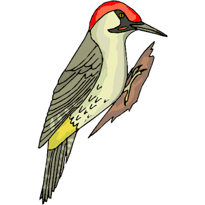 Image Result For Woodpecker Png - Woodpecker, Transparent background PNG HD thumbnail