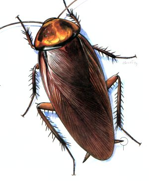 Pin Cockroach Clipart Ipis #4 - Ipis, Transparent background PNG HD thumbnail