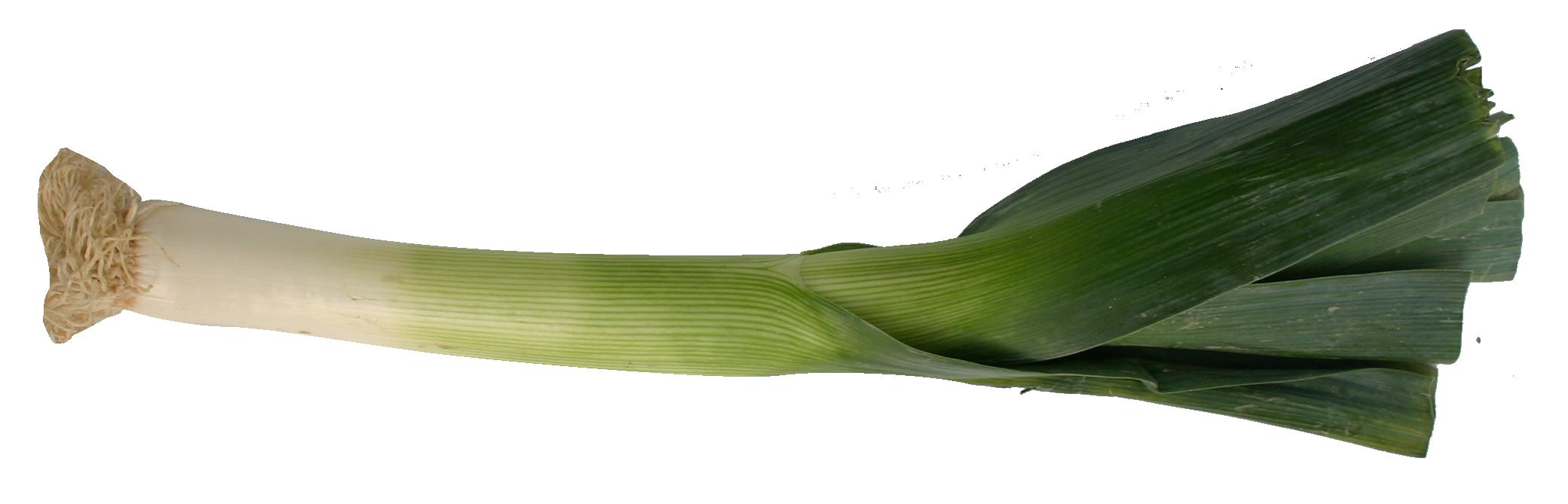 Leek PNG