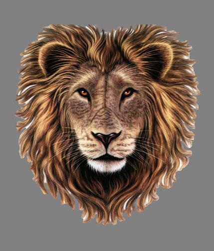 Lions Head HD PNG