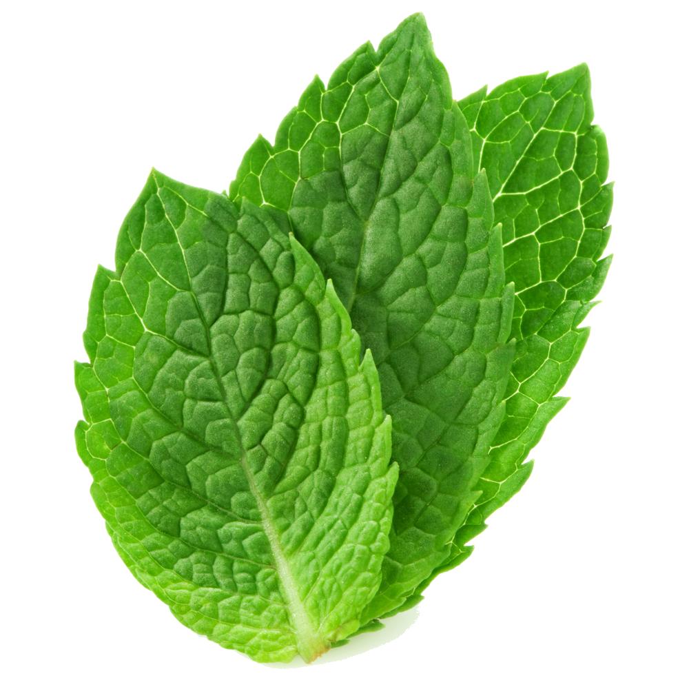 Mint HD PNG