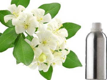 Mogra Flower Png - 5.0 1 Reviews Jasmine Attar, Transparent background PNG HD thumbnail