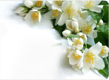 Mogra Flower Png - Jasmine Oil Is One Of The Most Popular Scents In Perfumery Today. It Is Often Referred To As The King Of Essential Oils (And Rose As The Queen Of Essential Hdpng.com , Transparent background PNG HD thumbnail