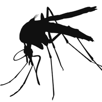 Mosquito High Quality Png Png Image - Mosquito, Transparent background PNG HD thumbnail