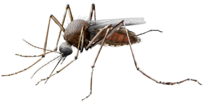 Mosquito Transparent Png Image - Mosquito, Transparent background PNG HD thumbnail