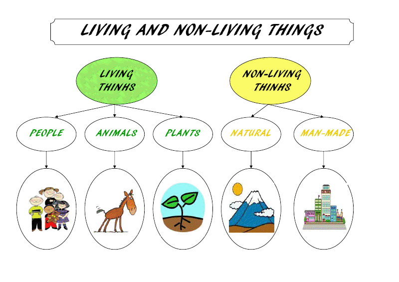 Non Living Things Pictures For Kids Png - Mrs. Bacchusu0026#39; Class: Learning Games: Living Things, Transparent background PNG HD thumbnail