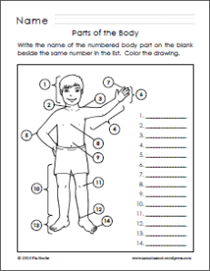Parts Of The Body For Kids Png Tagalog - Potb_3, Transparent background PNG HD thumbnail