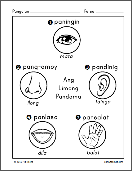 Parts Of The Body For Kids Png Tagalog - The First Worksheet In The Pdf File Below Asks The Student To Color The Senses Or Body Parts He Or She Will Use For The Object Shown., Transparent background PNG HD thumbnail
