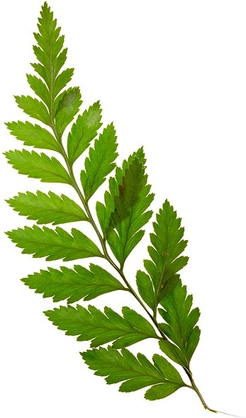 Plants Leaves Png Images Free Stock Photos We Have About (9,514 Files) Free Stock Photos In Hd High Resolution Jpg Images Format . - Leaves, Transparent background PNG HD thumbnail