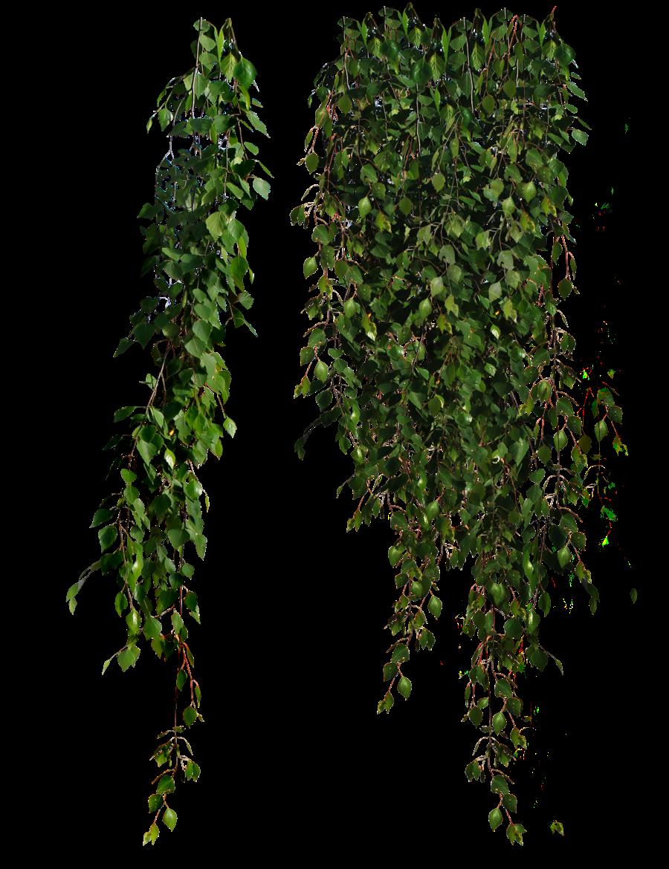 Plants PNG