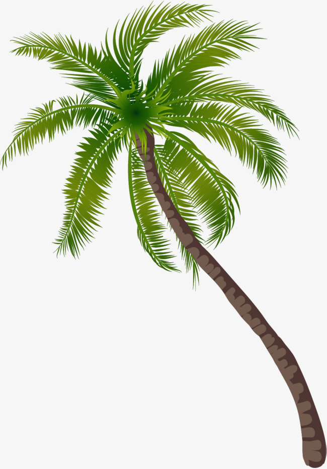 Png Coconut Tree - Beach Coconut Tree Pattern, Green Trees, Seaside, Trees Png Image And Clipart, Transparent background PNG HD thumbnail