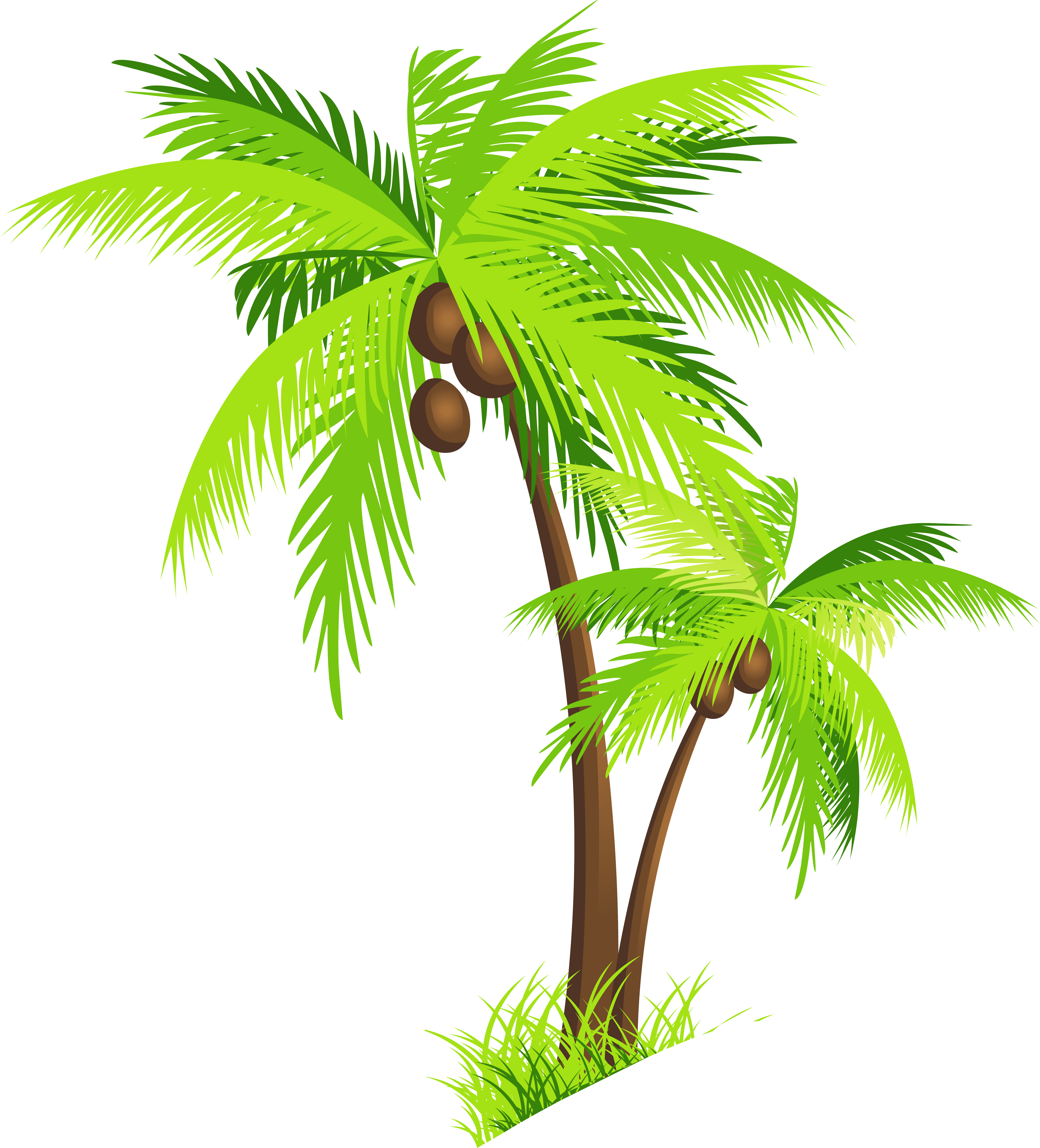 Png Coconut Tree - Coconut Tree Png Clipart, Transparent background PNG HD thumbnail