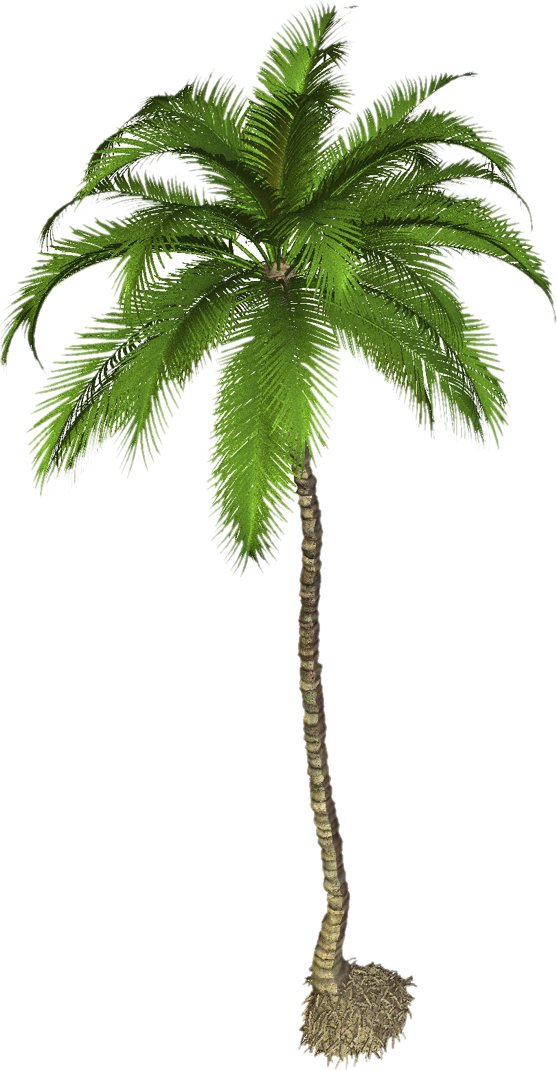 Png Coconut Tree - Coconut Tree Png Photo | Png Mart, Transparent background PNG HD thumbnail
