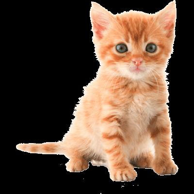 Png Cute Cat - Png Cute Cat Hdpng.com 400, Transparent background PNG HD thumbnail