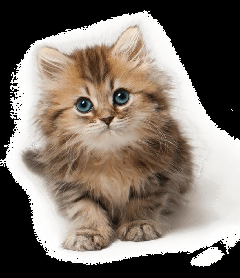 Png Cute Cat - Png Cute Cat Hdpng.com 828, Transparent background PNG HD thumbnail