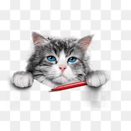 Png Cute Cat - Cat, Cat, Cute Cat, Foreign Cat Png And Psd, Transparent background PNG HD thumbnail