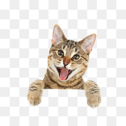 Png Cute Cat - Cute Funny Little Cat, Interesting, Kitty, Sign Png Image, Transparent background PNG HD thumbnail