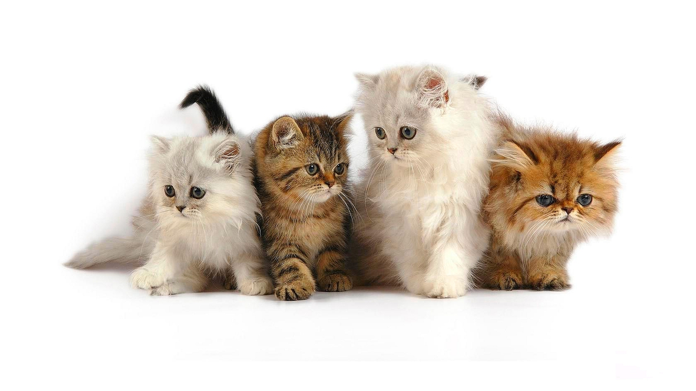 Png Cute Cat - E8Fee2E.png, Transparent background PNG HD thumbnail