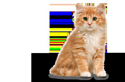 Png Cute Cat - File:cute Cat.png, Transparent background PNG HD thumbnail