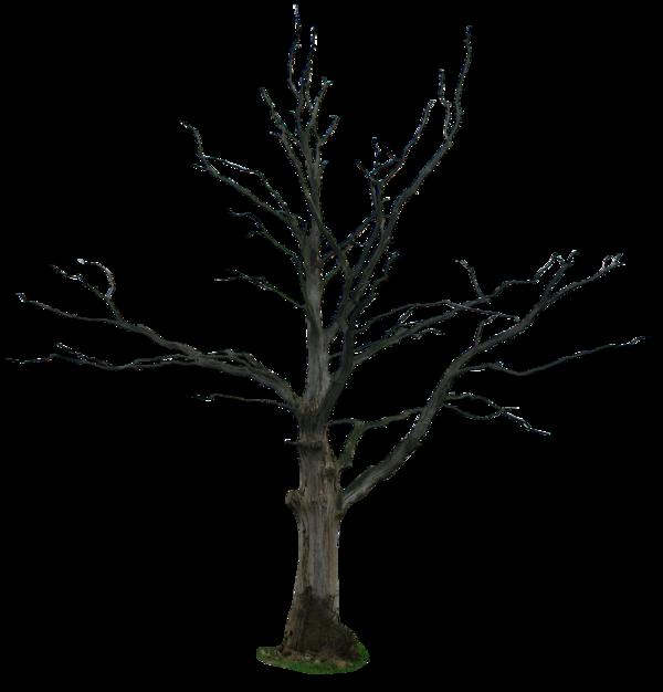 PNG Dead Tree