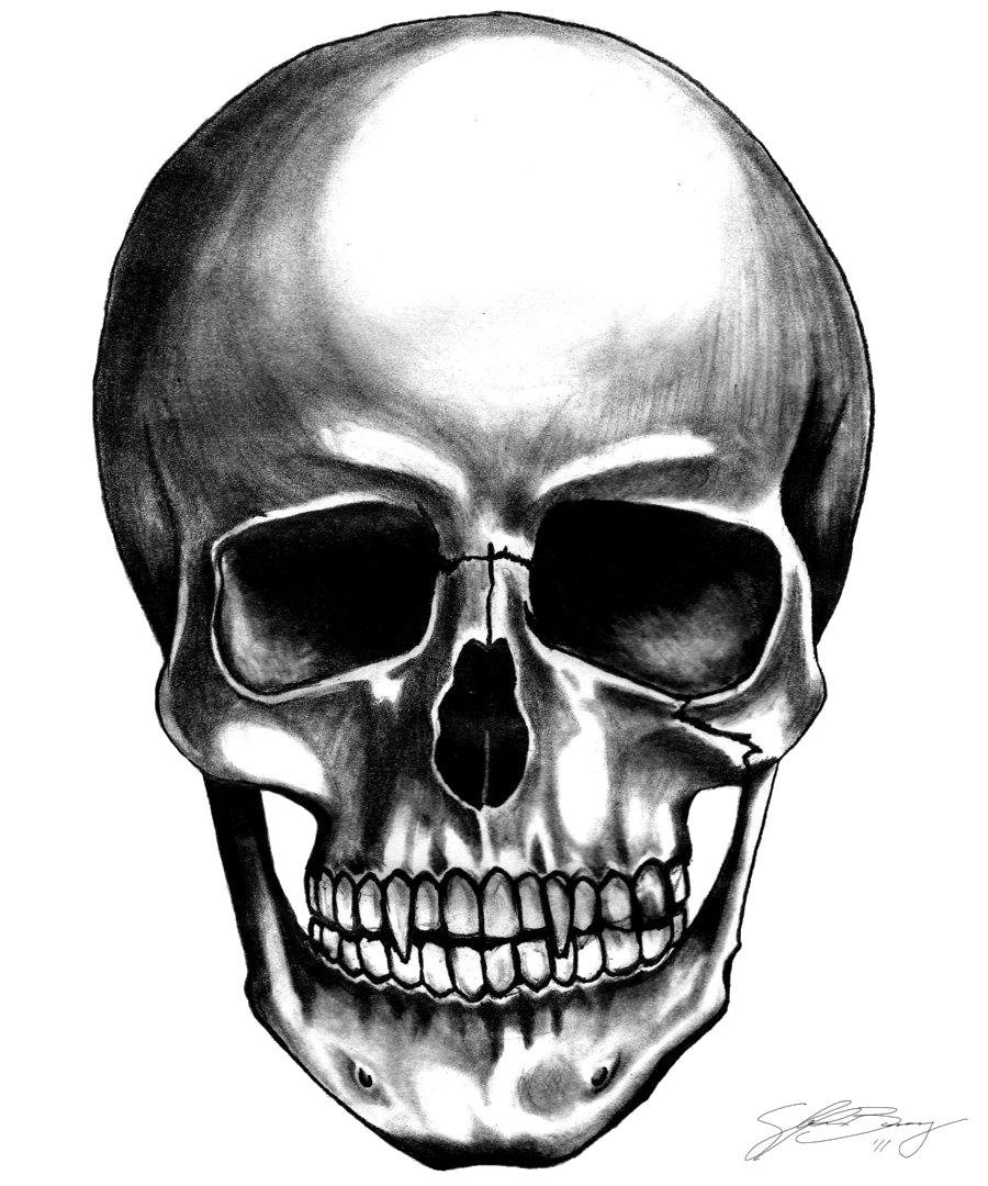 Png File Name: Skull Transparent Background - Skeleton Head, Transparent background PNG HD thumbnail