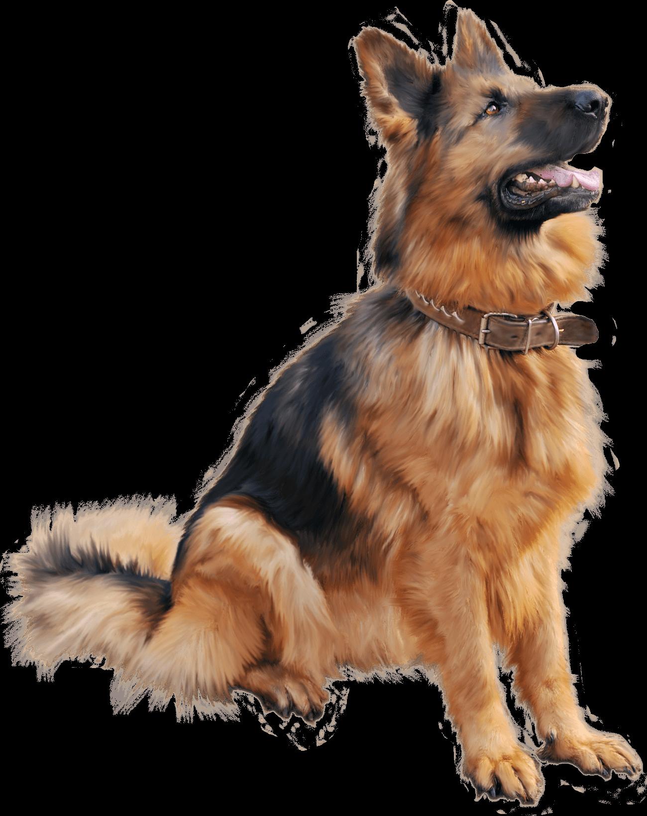 PNG German Shepherd