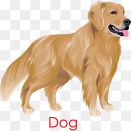 Golden Retriever Dog · Png Ai - Golden Retriever Dog, Transparent background PNG HD thumbnail