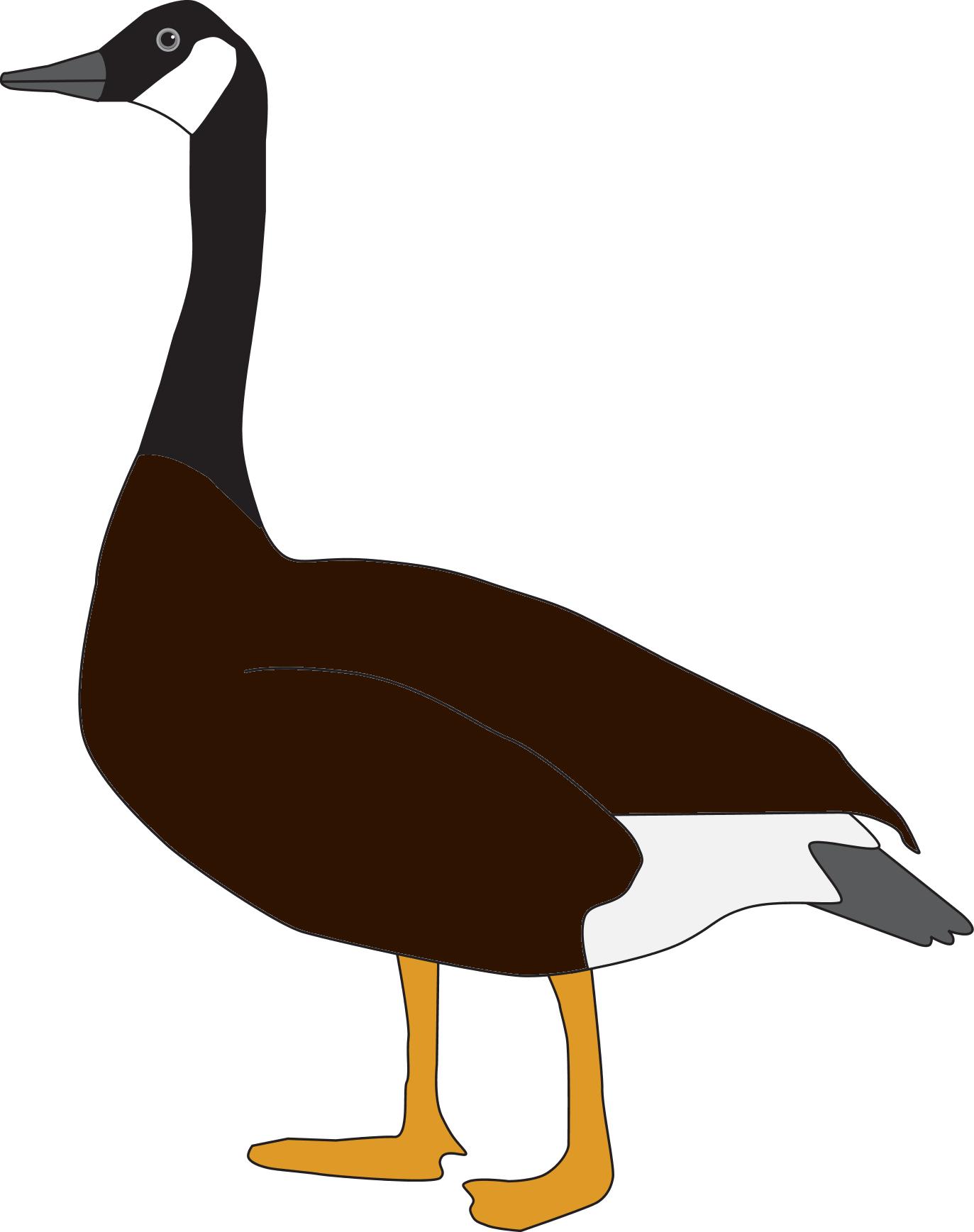 Goose.png - Goose, Transparent background PNG HD thumbnail