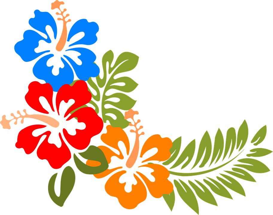 Hibiscus, Hawaii, Flowers, Tropical, Colorful, Spring - Hawaiian Flower, Transparent background PNG HD thumbnail