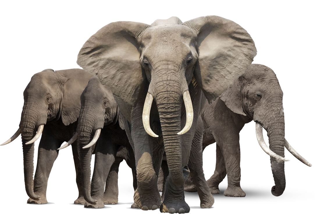 PNG HD Images Of Animals