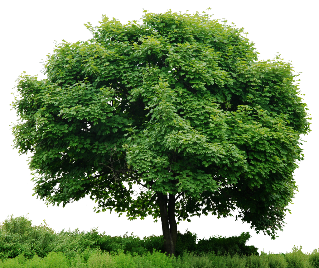 PNG HD Images Of Trees