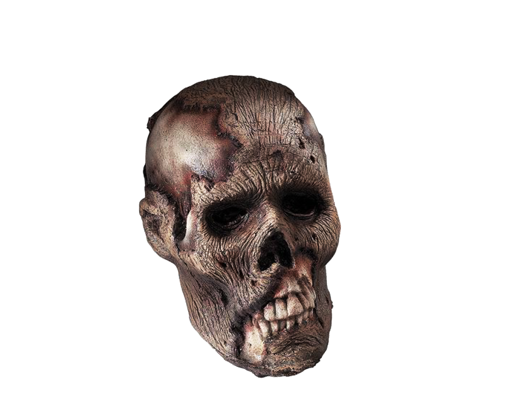 Png Head By Moonglowlilly - Skeleton Head, Transparent background PNG HD thumbnail