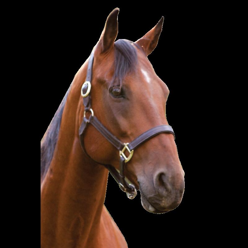 Horse Head - Horse Head, Transparent background PNG HD thumbnail