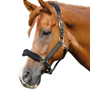 Horse Head Collars And Lead Ropes Ideal For Everyday Or Competition Use. - Horse Head, Transparent background PNG HD thumbnail