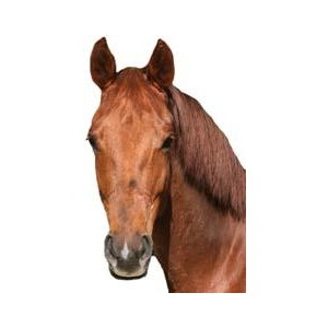 Horse Head Markings - Horse Head, Transparent background PNG HD thumbnail