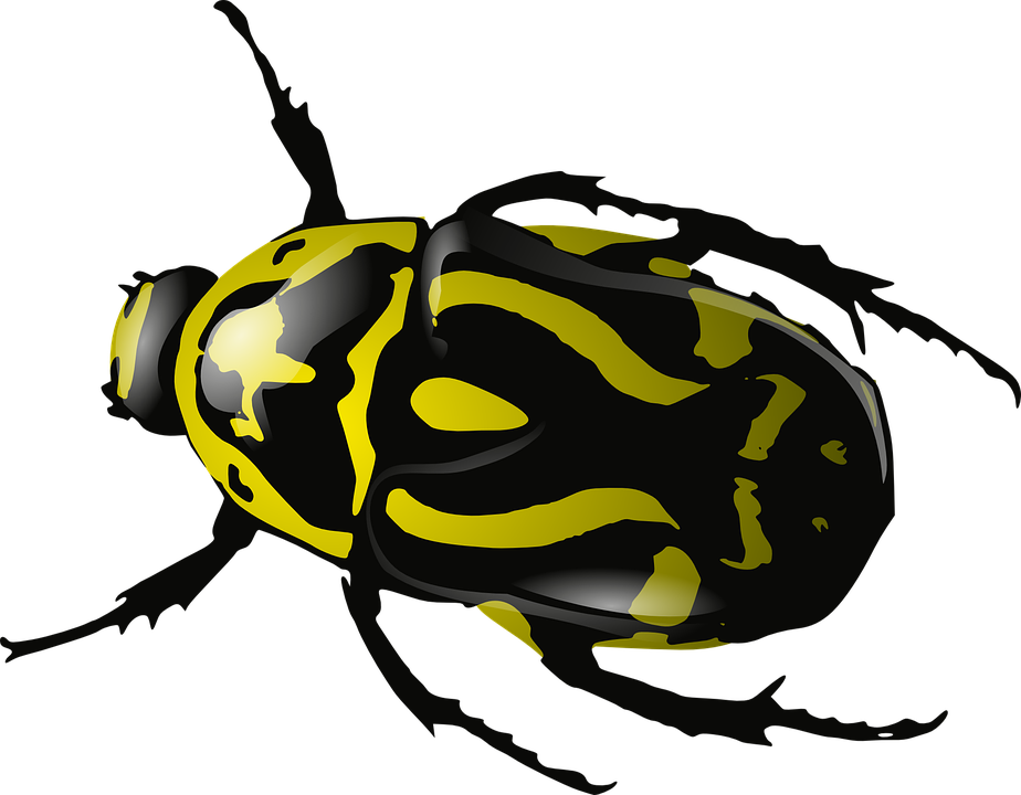 Bug, Insect, Beetle, Wasp, Yellow, Black - Insects And Bugs, Transparent background PNG HD thumbnail