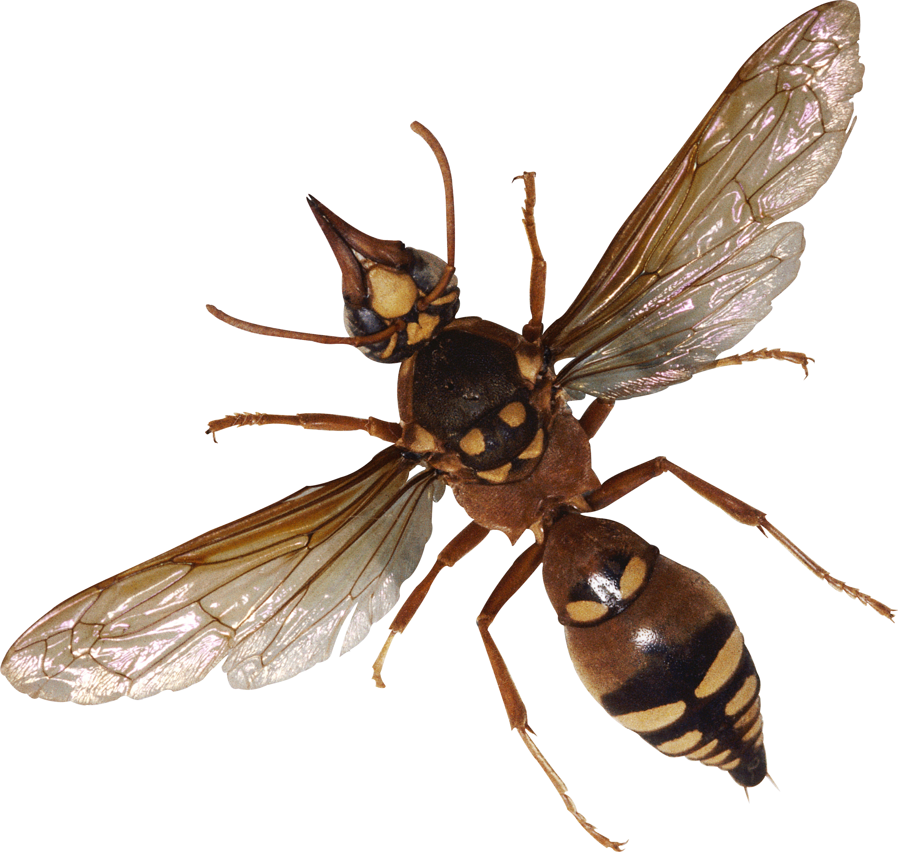 Bug Png Image - Insects And Bugs, Transparent background PNG HD thumbnail