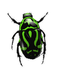 Green Bug Png Image, Insect Png - Insects And Bugs, Transparent background PNG HD thumbnail