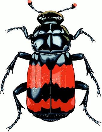 Http://www.cksinfo Pluspng.com/clipart/animals/insects/ - Insects And Bugs, Transparent background PNG HD thumbnail