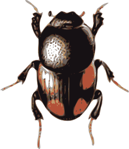 Insect Beetle Clip Art - Insects And Bugs, Transparent background PNG HD thumbnail