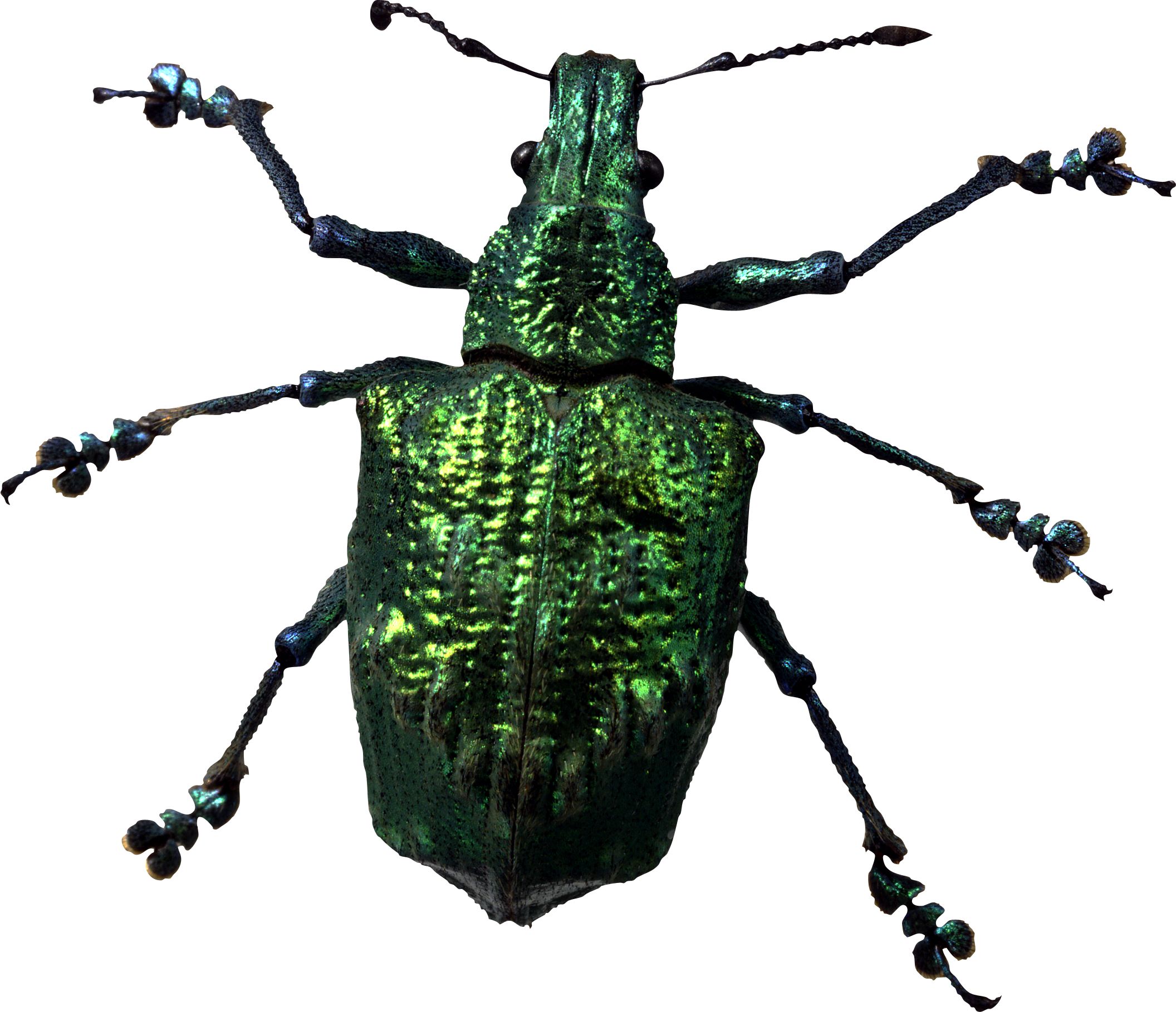 Insect Bug Png Image - Insects And Bugs, Transparent background PNG HD thumbnail